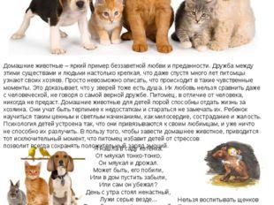 Домашние животные – яркий пример беззаветной любви и преданности. Дружба межд