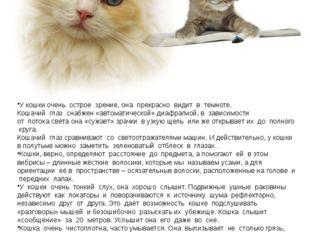 «Необыкновенные способности кошки» У кошки очень острое зрение, она прекрасно