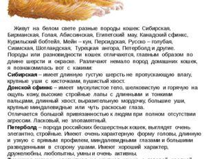 Живут на белом свете разные породы кошек: Сибирская, Бирманская, Голая, Абис