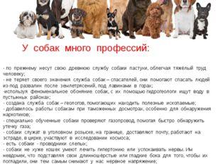 « Мастера на все лапы» У собак много профессий: - по прежнему несут свою древ