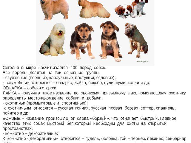 « Кинология – наука, изучающая собак» Сегодня в мире насчитывается 400 пород...