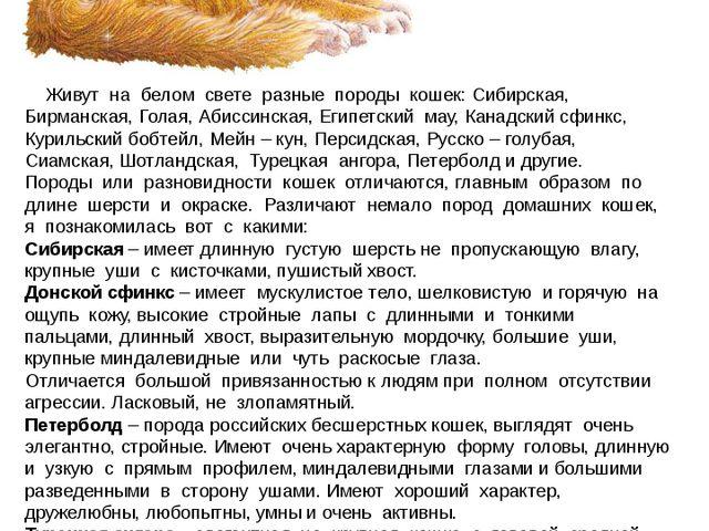 Живут на белом свете разные породы кошек: Сибирская, Бирманская, Голая, Абис...
