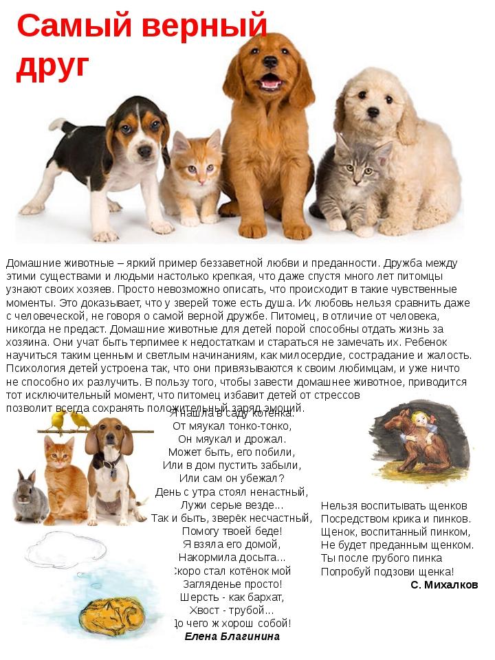Домашние животные – яркий пример беззаветной любви и преданности. Дружба межд...