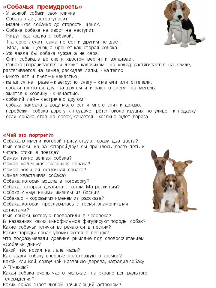 «Собачья премудрость» - У всякой собаки своя кличка. - Собака лает, ветер уно...