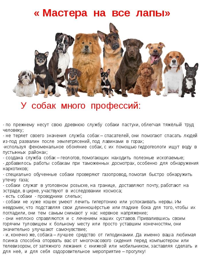 « Мастера на все лапы» У собак много профессий: - по прежнему несут свою древ...