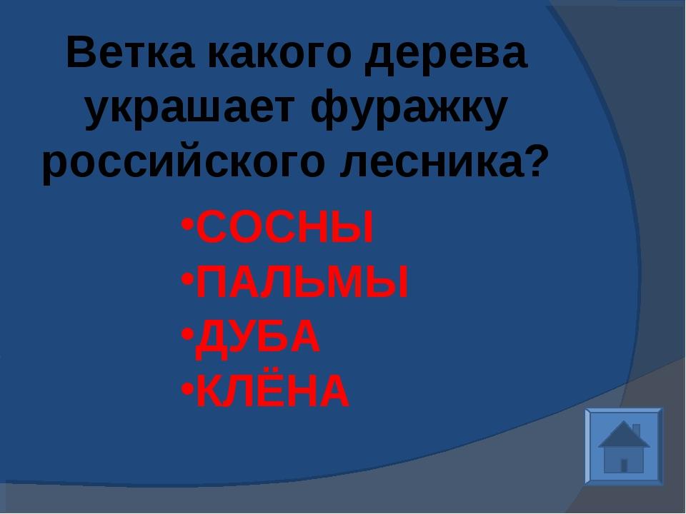 Ветка какого дерева украшает фуражку российского лесника? СОСНЫ ПАЛЬМЫ ДУБА К...