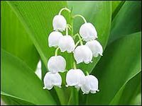Весна пришла!! Николай Кабанов's Empower Network Blog