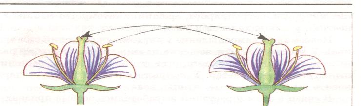Схемы опылений - Картинка 5472/10