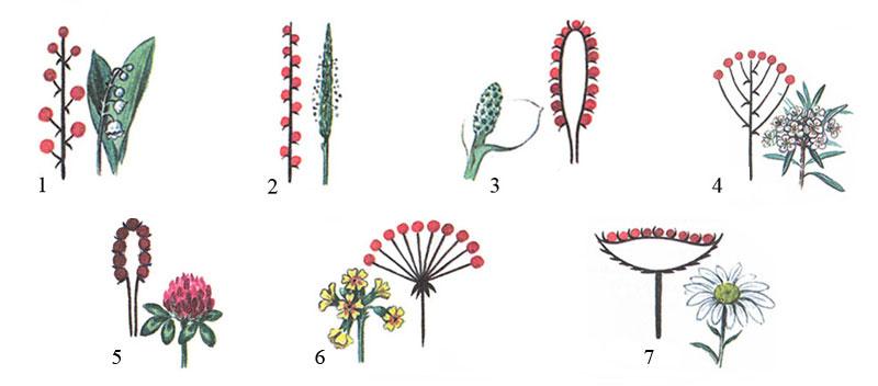 Виды древесных растений - Учащиеся будут вести наблюдения (как письменно, так и в картинках) над выбранными ими.
