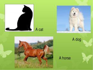 A cat A dog A horse