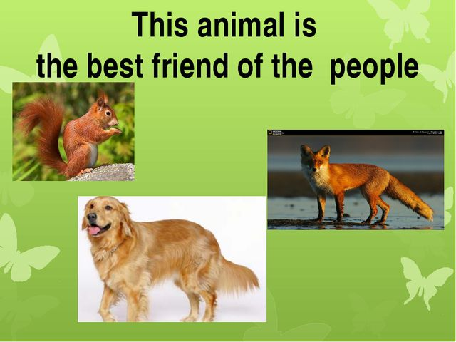 This animal is the best friend of the people