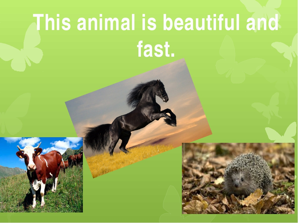 This animal is beautiful and fast.