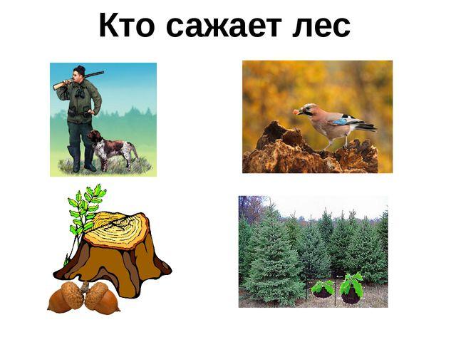 Кто сажает лес