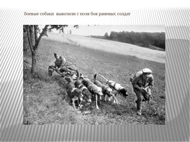боевые собаки вывозили с поля боя раненых солдат