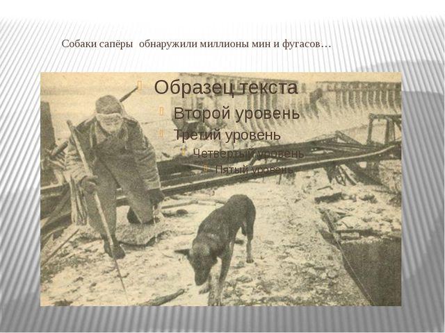 Собаки сапёры обнаружили миллионы мин и фугасов…