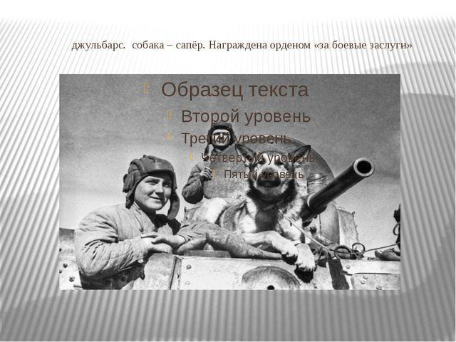 джульбарс. собака – сапёр. Награждена орденом «за боевые заслуги»