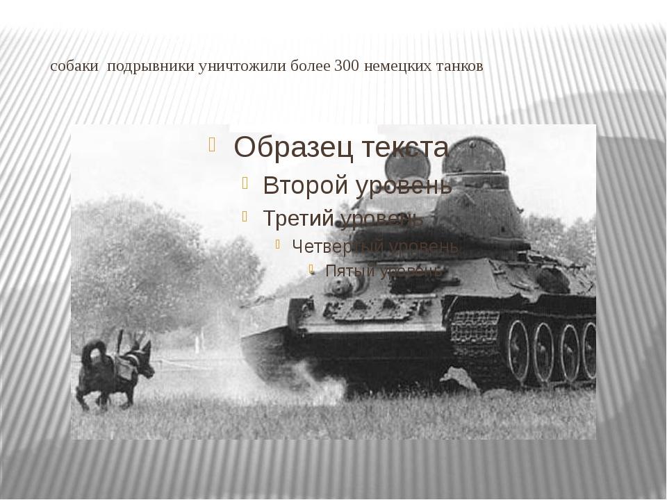 собаки подрывники уничтожили более 300 немецких танков