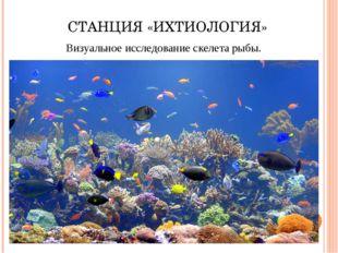 СТАНЦИЯ «ИХТИОЛОГИЯ» Визуальное исследование скелета рыбы.