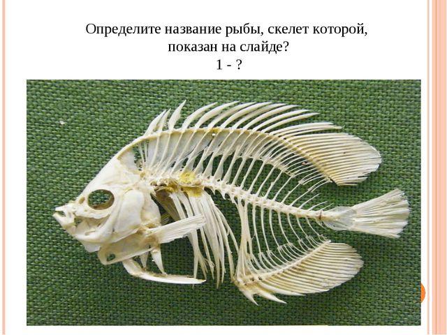 Определите название рыбы, скелет которой, показан на слайде? 1 - ?