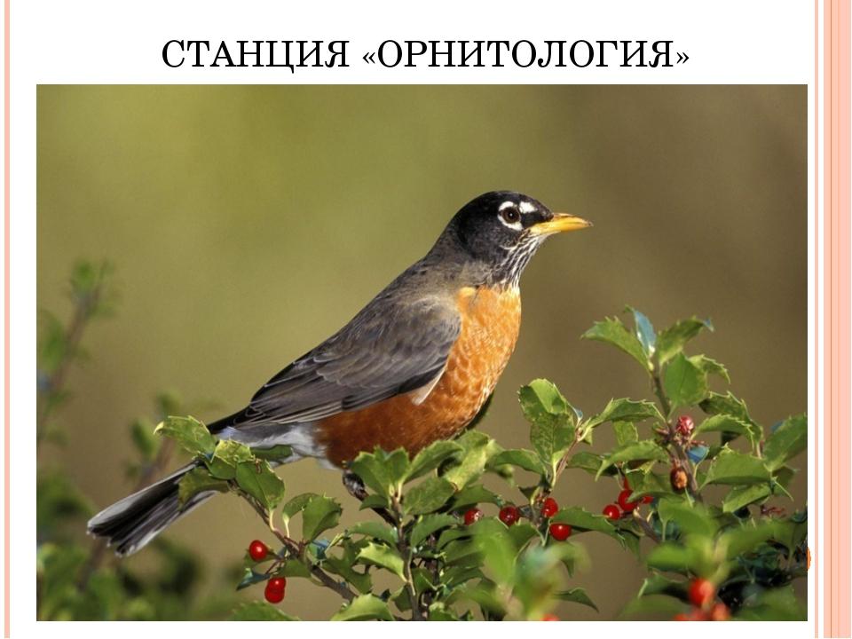 СТАНЦИЯ «ОРНИТОЛОГИЯ»