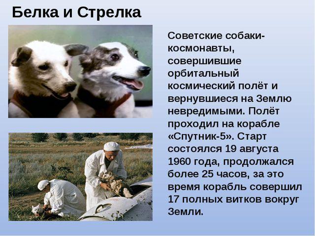Белка и Стрелка Советские собаки-космонавты, совершившие орбитальный космичес...