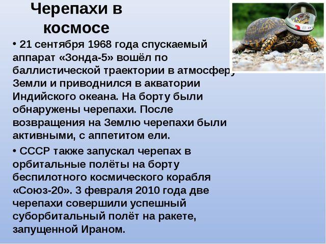 Черепахи в космосе 21 сентября 1968 года спускаемый аппарат «Зонда-5» вошёл п...