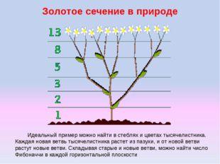 Золотое сечение в природе Идеальный пример можно найти в стеблях и цветах тыс