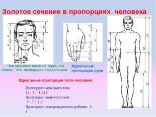 Золотое сечение в пропорциях человека Чем красивее кажется лицо, тем ближе е