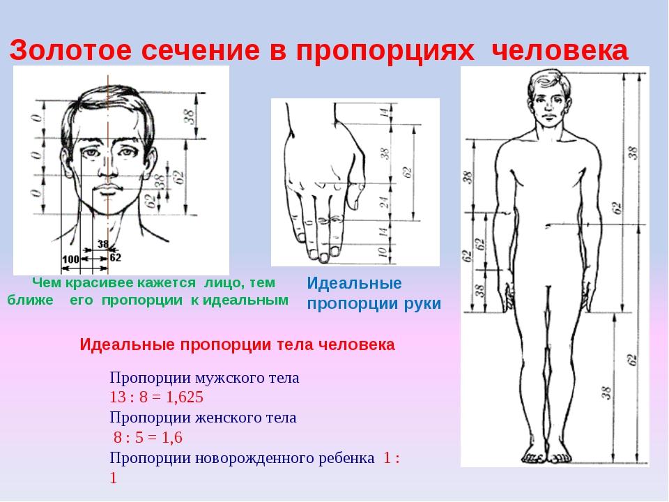 Золотое сечение в пропорциях человека Чем красивее кажется лицо, тем ближе е...