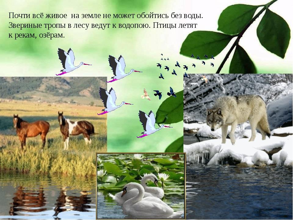 Почти всё живое на земле не может обойтись без воды. Звериные тропы в лесу ве...