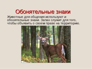 Животные для общения используют и обонятельные знаки. Запах служит для того,