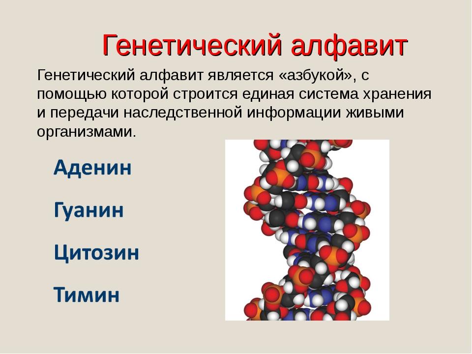 Генетический алфавит Генетический алфавит является «азбукой», с помощью котор...