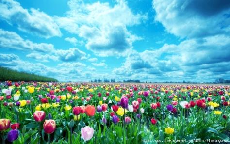 http://img0.liveinternet.ru/images/attach/c/8/99/30/99030916_1364367846_tyulpany_cvety_pole_nebo_oblaka_gorizont_priroda_23655_2560x1600.jpg