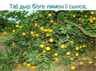 Тағдыр бізге лимон ұсынса,