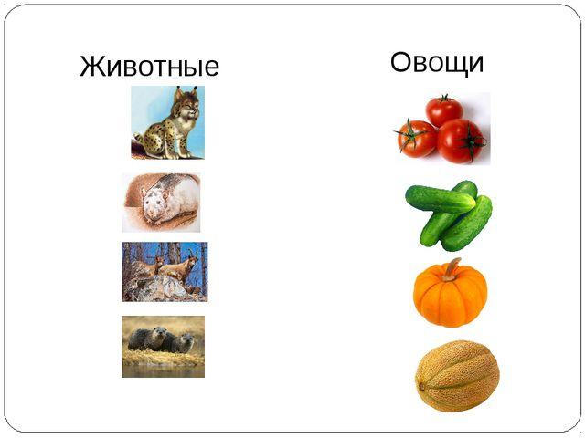 Овощи Животные