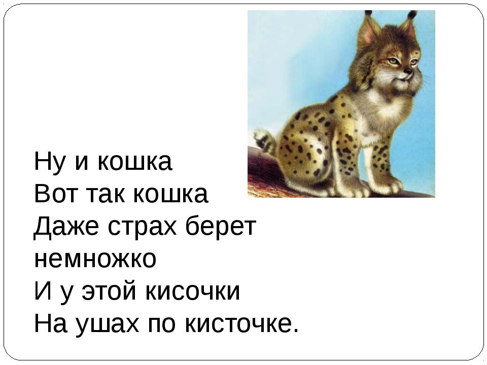 Ну и кошка Вот так кошка Даже страх берет немножко И у этой кисочки На уш...