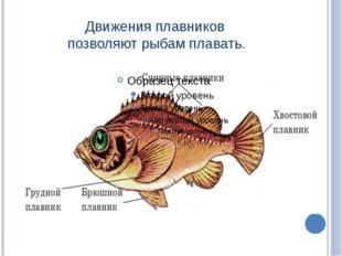 Движения плавников позволяют рыбам плавать.