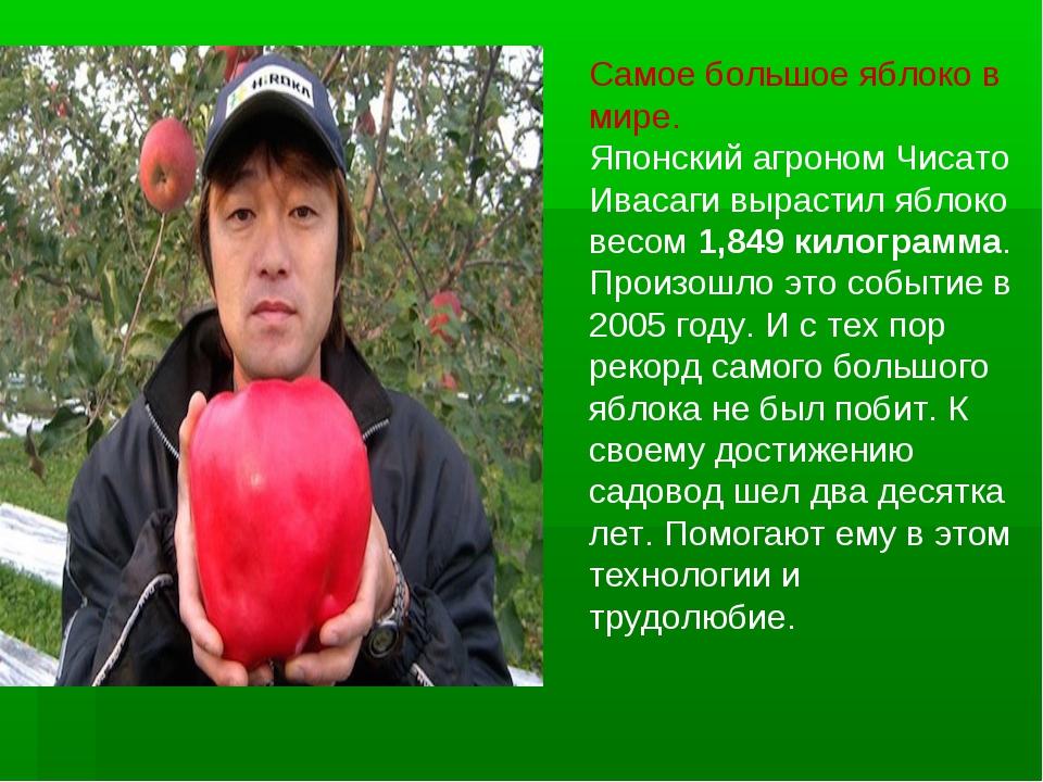 Самое большое яблоко в мире. Японский агроном Чисато Ивасаги вырастил яблоко...