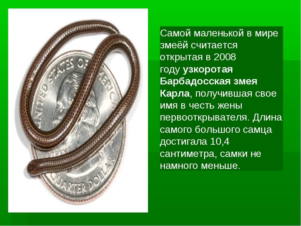 Самой маленькой в мире змеёй считается открытая в 2008 годуузкоротая Барбадо...