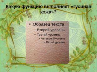 Какую функцию выполняет «гусиная кожа»? Рефлекс, приводящий к возникновению «