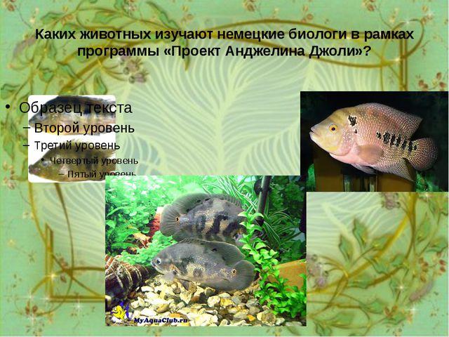 Каких животных изучают немецкие биологи в рамках программы «Проект Анджелина...
