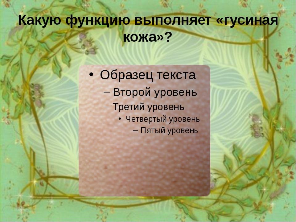 Какую функцию выполняет «гусиная кожа»? Рефлекс, приводящий к возникновению «...
