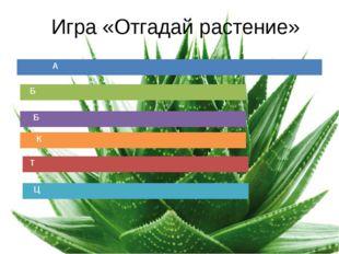 Игра «Отгадай растение» А Б Б К Т Ц