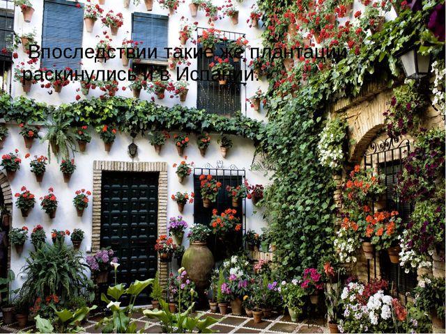 Впоследствии такие же плантации раскинулись и в Испании.