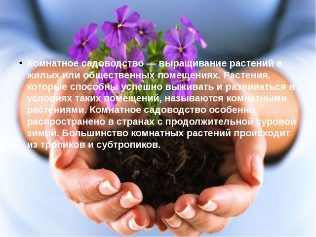 Комнатное садоводство — выращивание растений в жилых или общественных помещен...