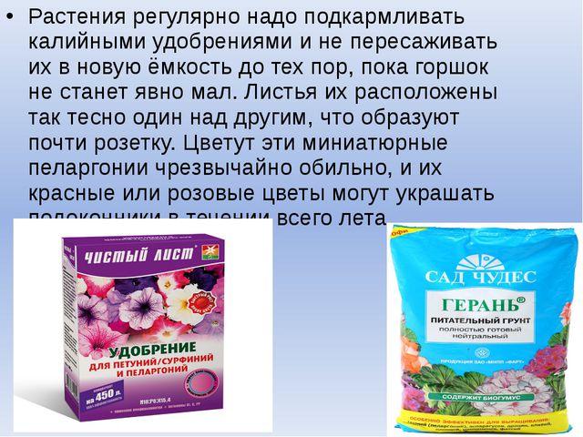 Растения регулярно надо подкармливать калийными удобрениями и не пересаживать...