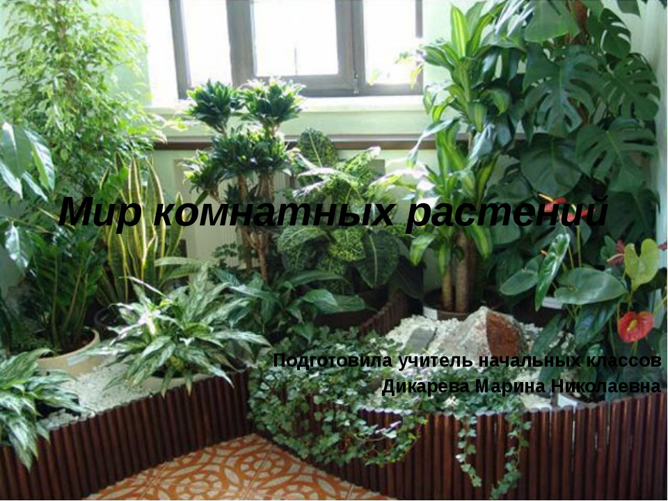 Мир комнатных растений Подготовила учитель начальных классов Дикарева Марина...