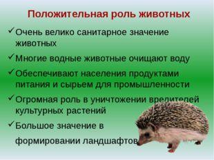 Положительная роль животных Очень велико санитарное значение животных Многие