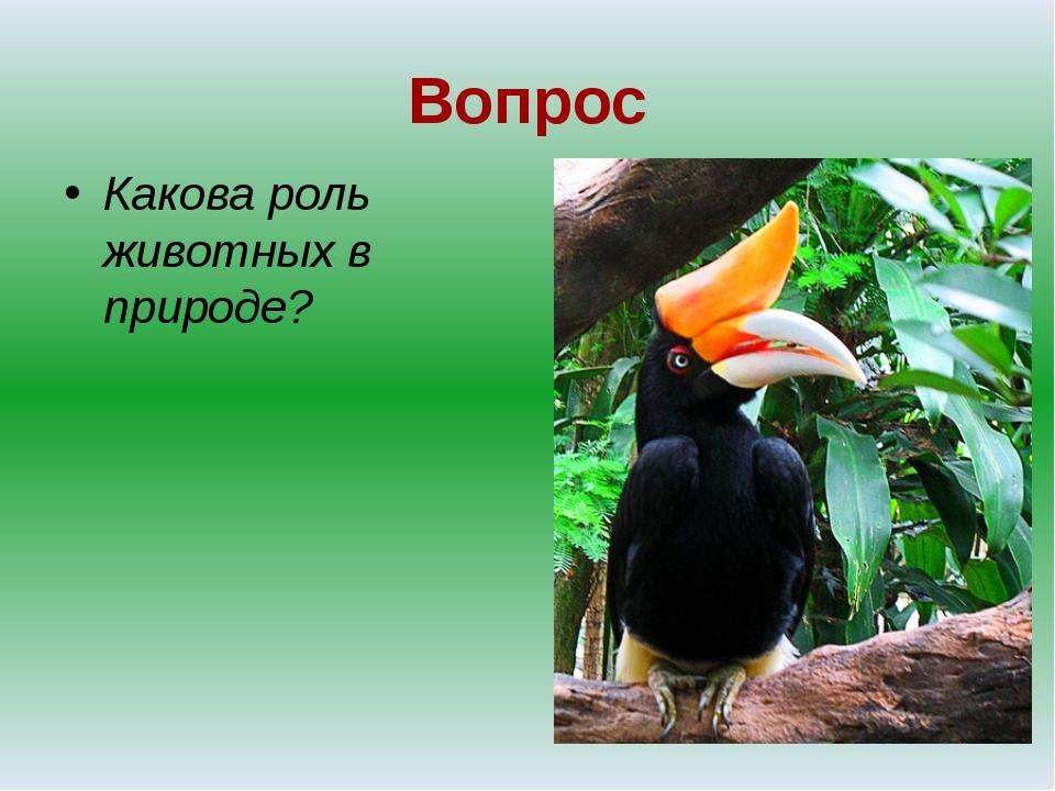 Вопрос Какова роль животных в природе?
