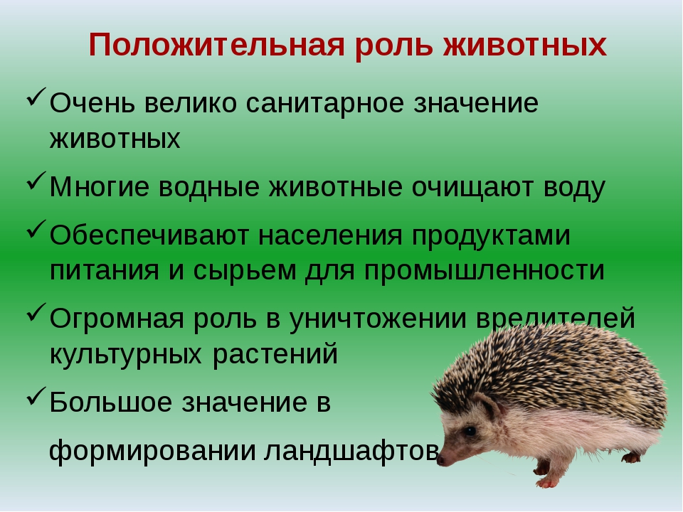 Положительная роль животных Очень велико санитарное значение животных Многие...